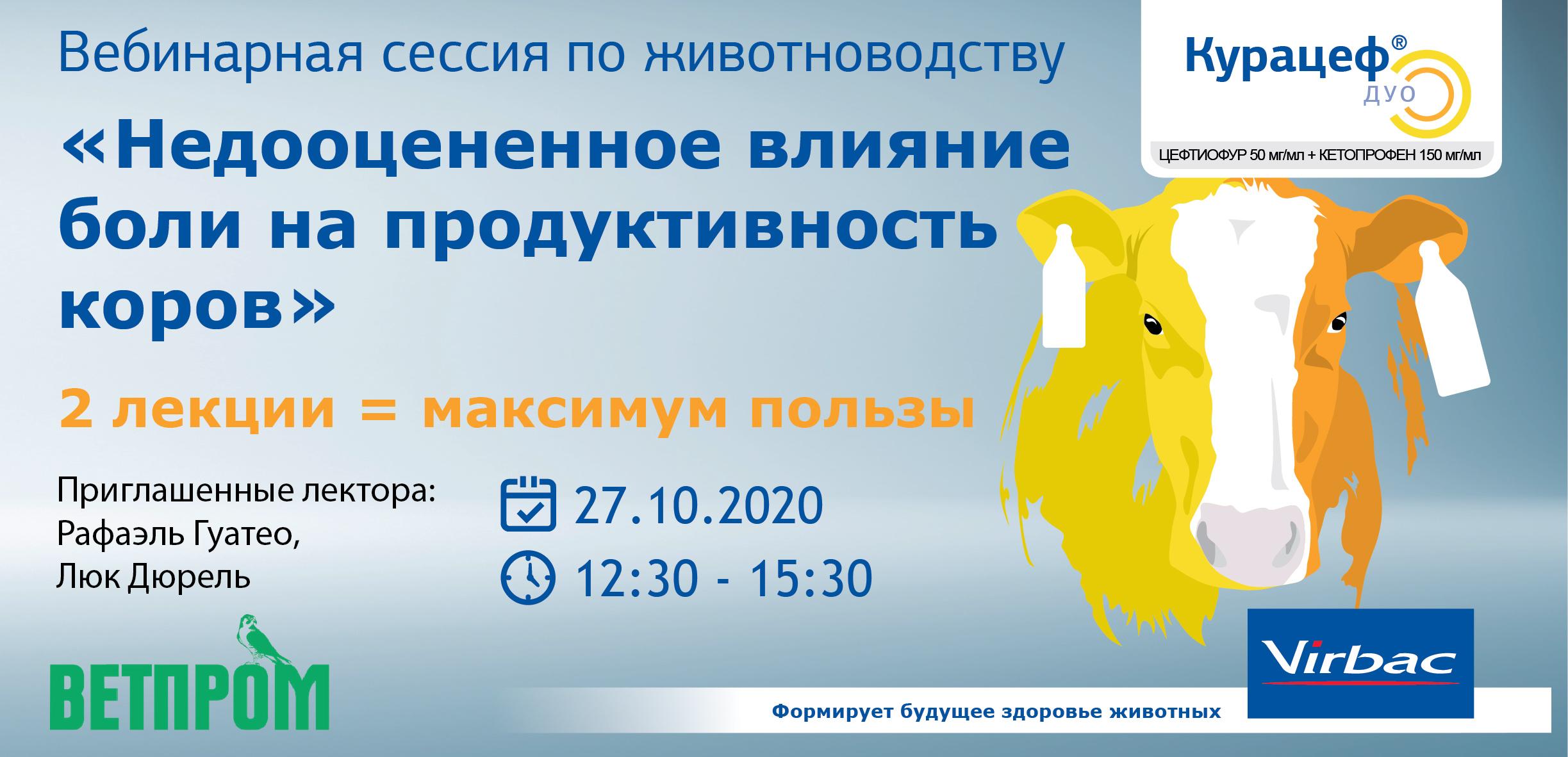 banner_kuratsef_duo_Montazhnaya_oblast_1